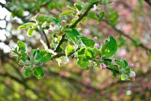 de bloeiende takken van bomen in het bos foto