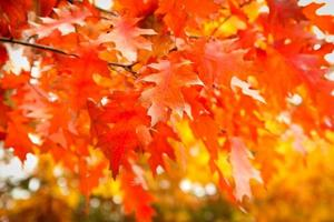 herfst in het park. foto