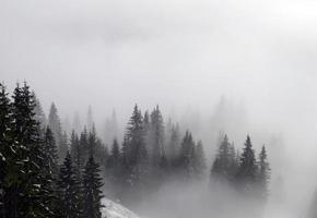 bergwald im nebel foto