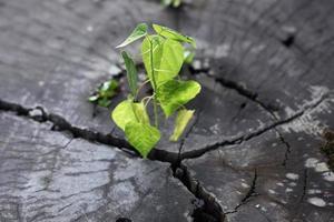 jonge plant op abstracte stomp achtergrond foto