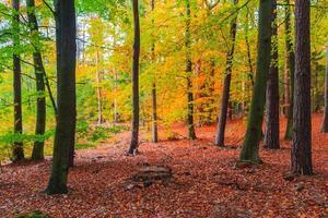 herfstdiepten bos bomen kleurrijke bladeren foto