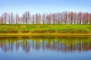 reflectie bomen
