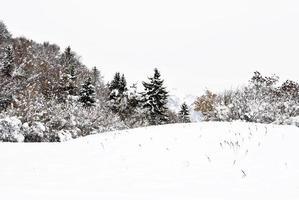 bevroren bomen foto