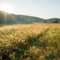 mistige velden en weiden na de regen in de zomer foto