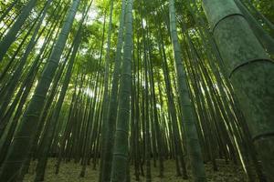 sagano, bamboebos in arashiyama, kyoto, japan foto
