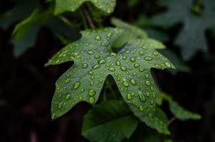 blad met waterdruppels in angeles national forest