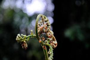 topje van varenblad in bos close-up foto