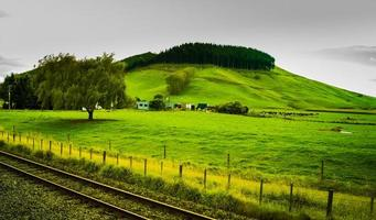 trein naar Wellington met boom foto