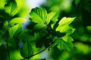 groene bladeren foto