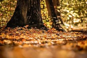 bomen en herfstbladeren.