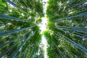 chikurin-no-michi (bamboebos) in arashiyama in kyoto