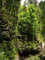 bomen die groeien op de steile wanden van de breitachklamm, duitsland foto