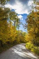 weg door de herfstbomen
