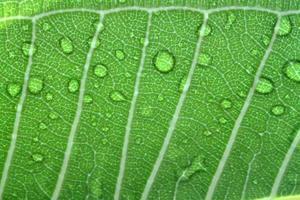 water druppels op blad close-up