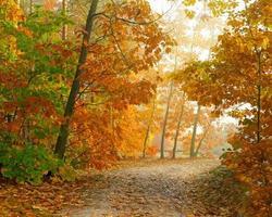 herfst park