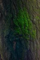 mos op boom foto