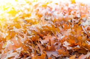 gele bladeren op de herfstachtergrond foto