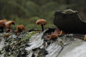 herfst - paddestoel op mos