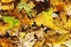 gouden bladeren in de herfst op straat foto