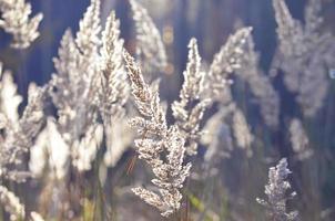 abstracte achtergrond van droog gras foto