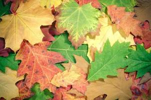herfst achtergrond. foto