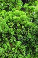 groene bladeren. foto