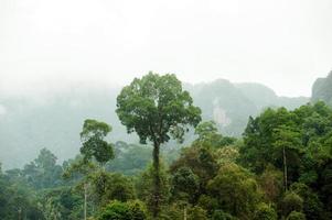 boom in bos in het nationale park van khao sok, thailand. foto