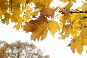 boom in de herfst