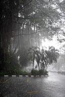 tropische bomen onder regen foto