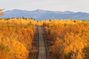 herfst gekleurde bomen langs de weg in Brits-columbia foto