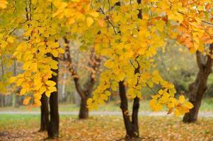 verzameling van prachtige kleurrijke herfstbladeren foto