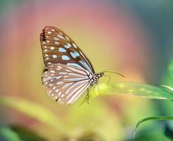 mooie vlinder foto