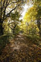 bomen in de herfst foto