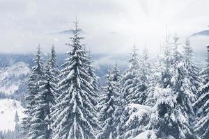 bomen bedekt met rijm en sneeuw in de bergen