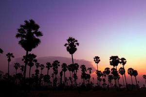 palmbomen silhouet op prachtige zonsondergang foto