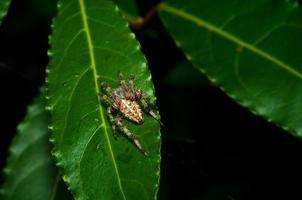 spin staat stil op een blad in het bos