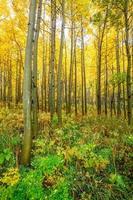 esp bos in de herfst foto