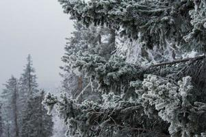 besneeuwd bos op de hellingen van de berg.
