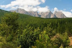 boslandschap met bergen en bewolkte hemel, Zuid-Afrika