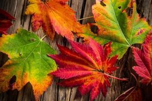mooie herfst achtergrond