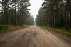 mistige landweg in de vroege ochtend