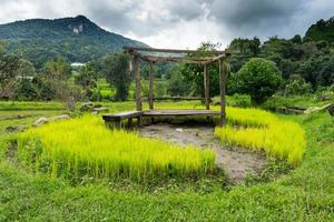 landschap rijstveld in Chiang Mai