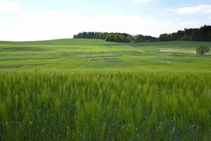 landschap in het zuiden van tsjechië