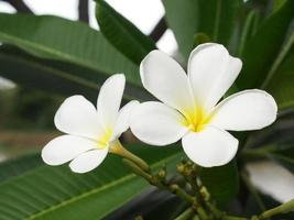 witte bloem foto