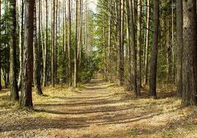 pad in het bos foto