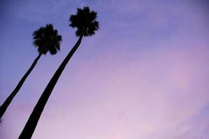 palmbomen bij zonsondergang foto