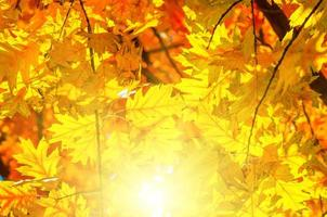 bladeren geel rood foto