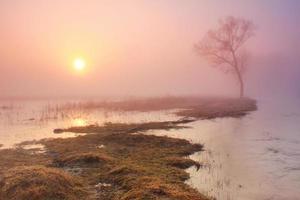 mistige ochtend op de rivier in het vroege voorjaar foto