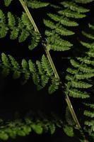 de bladeren van varens benadrukten de zon. bosvegetatie. foto