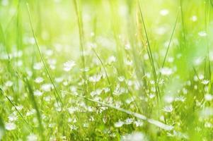 wilde bloemen en groen gras in een veld foto